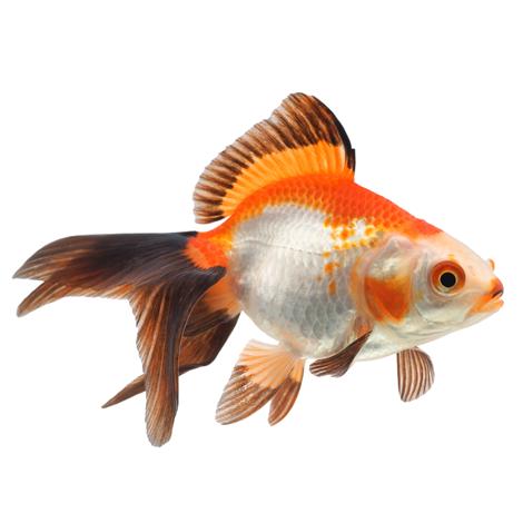 Для аквариумных рыбок