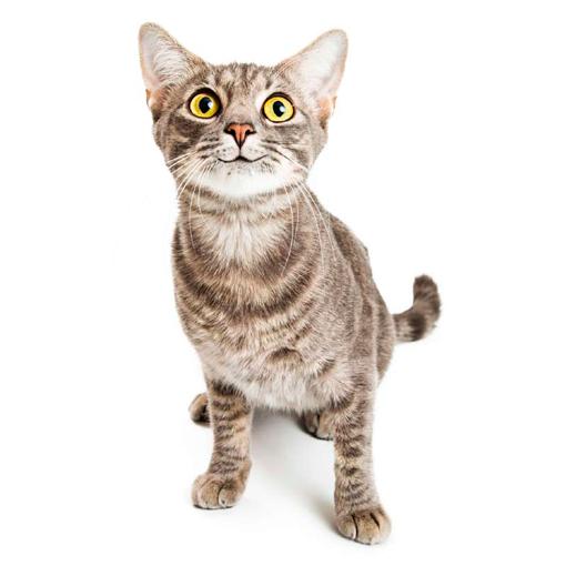 Для кошек и котов
